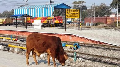 Photo of Stray animals rule railway tracks, install catchers at entry points